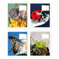 Schriften - Insecten   Heutink   Liniatuur 6-4-6 mm   25 stuks