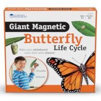 Levenscyclus vlinder | Magnetisch