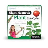 Levenscyclus plant | Magnetisch