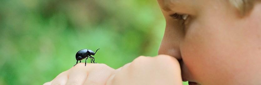 Op safari in eigen tuin: hoeveel dieren zie je?