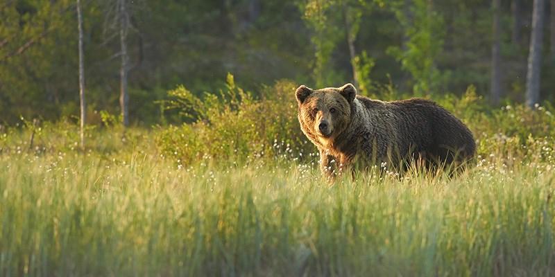 Tip: natuur via de webcam, van koolmees tot bruine beer