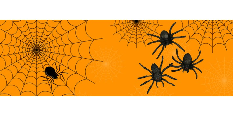 Knutseltip herfst: zwarte reuzespinnen